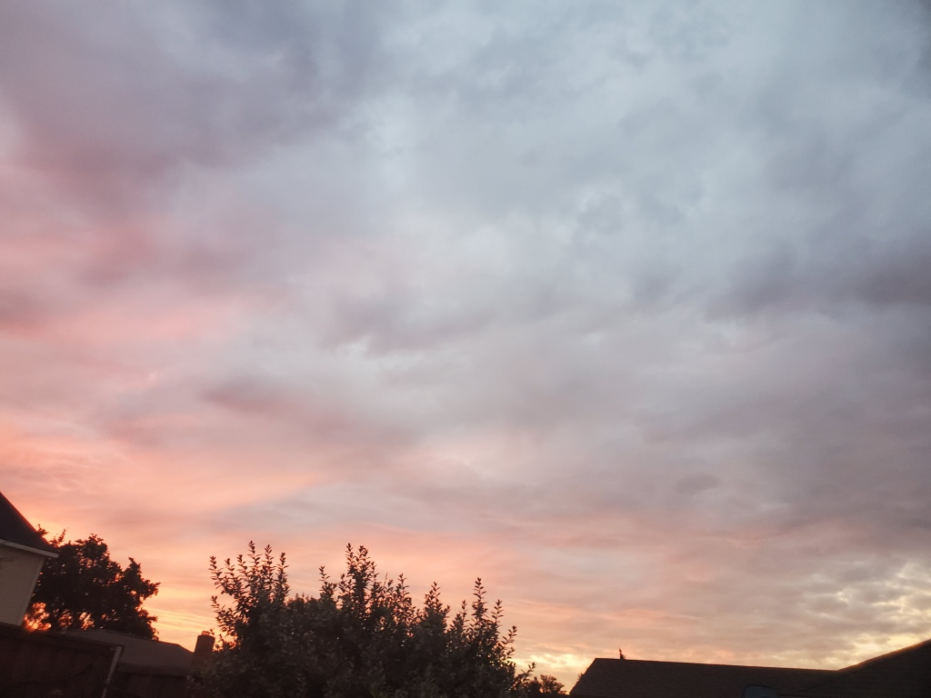 The sky is filling with pink, blue and orange clouds. The tops of trees and a fence can be seen at the bottom of the picture.